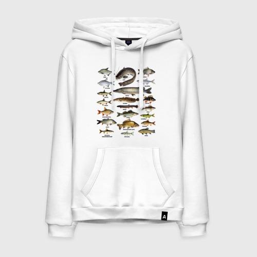 Мужская толстовка хлопок Популярные виды рыб
