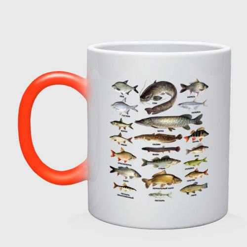 Кружка хамелеон Популярные виды рыб