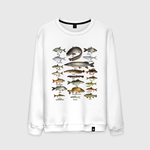 Мужской свитшот хлопок Популярные виды рыб