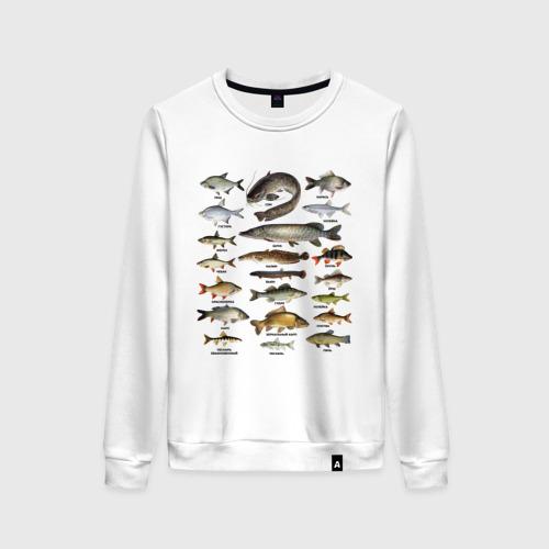 Женский свитшот хлопок Популярные виды рыб