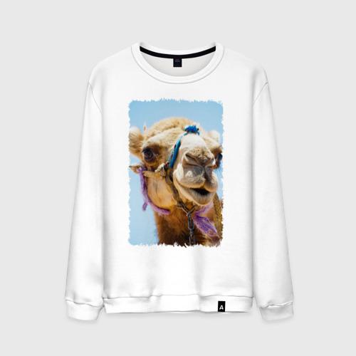 Мужской свитшот хлопок Верблюд